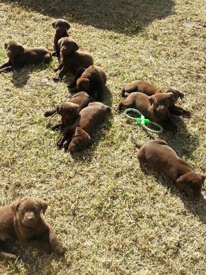 7 boys, 5 girls.