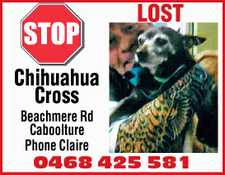 lost Beachmere Rd Caboolture. Phone Claire