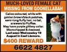 MUCH-LOVED FEMALE CAT MISSING FROM GOONELLABAH Calico coloured, white with golden brown/black patches, semi-long fluffy hair, no tail, answers to Fluffles. May have purple glittery collar. Microchipped & desexed. Last seen Wednesday 19 August in East Lismore. $400 REWARD 6622 4827