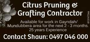 Available for work in Gayndah/Dubbera area for the next 2 - 3 months.  25 years Experience  Contact Shaun