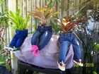 Novel decorative pot plant holder, a talking piece in your home.  Pant holder, plants and chair sold separately or as a set.   Pants $15, plants from $5  Go all out and put them on a little chair – chairs $5 Get in quick to choose your favourite..  Come and have a ...