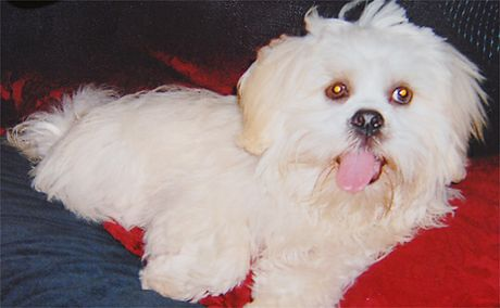 Friendly and only 15 months old, Apso was taped by its head and chest to a tree and died.  Blood in the dog's m