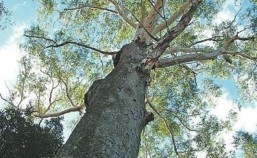 Concerned Forests NSW staff in Coffs Harbour spoke with a Public Service Association member today about how turning the department into a state owned corporation could possibly affect them.