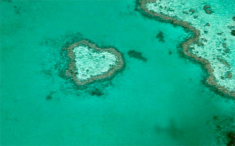 AUSTRALIA's greatest sex show came to the Whitsunday waters last week when the Great Barrier Reef's annual coral spawning occurred.