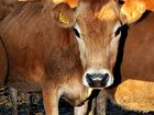 Study into planned Central Highlands meatworks on table