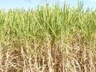 Canegrowers grill ministers at AGM