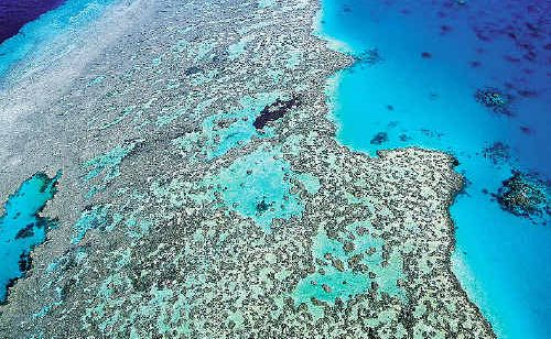 Federal Environment Minister Tony Burke has announced a huge new marine reserve for the Coral Sea.