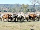 MEAT and  Livestock Australia's 2015 cattle industry projections quarterly update suggests unprecedented global demand will drive beef.