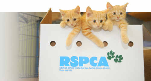 No unwanted Christmas presents were dumped at the RSPCA Bundaberg Shelter, but the centre is taking in a number of strays.