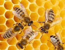 Not enough honey for Brunswick Heads developer