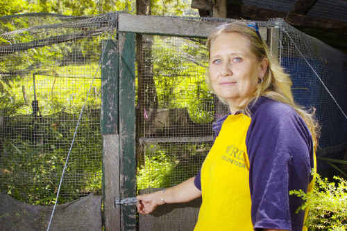 The Pocket Farmer and wildlife carer Katy Stewart says the council's trapping program has done much better than baiting programs farmers have previously had to rely on.