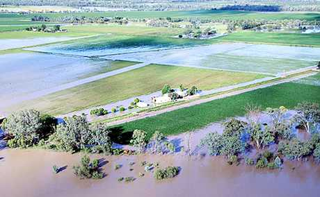 CROPS DROWN: The swollen Dawson River engulfs cotton crops near Theodore.