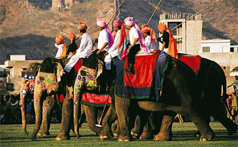 Players line up for elephant polo in Thailand.