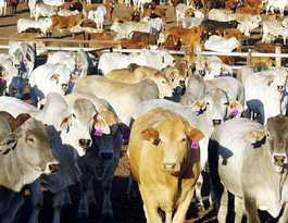 Beef and sugar exports optimistic about Trans Pacific deal