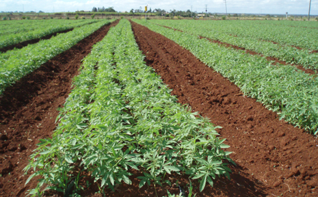 PLAN STALLED: The plan to make Monto a key growing and processing centre for Queensland's emerging $10 million commercial hemp industry has been stalled by slow government decison-making.