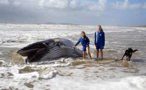 Kelly and Tayla Stjernqvist with a humpback whale that was found washed up on Noosa North Shore.