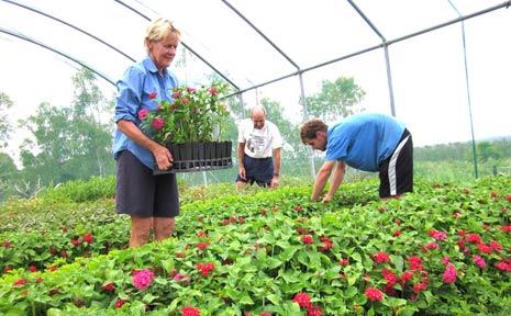 Delphine and Ray Archer and Nathan Vogler get the plants ready for the open day.