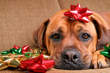 Pets have been abandoned in Tweed this Christmas holiday.
