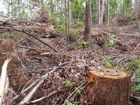 Green groups attack logging growth