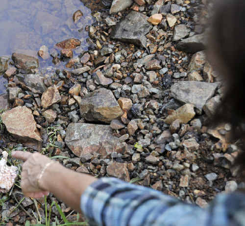 Susan Fleetwood found some dead fish pieces that had been dumped in a small river near her house.
