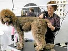Owner of Sassy Grooming for Cool Dogs Margaret Leddy, grooming Kahlo the poodle, is sad to be moving from her location in The Boulevard in Ballina .