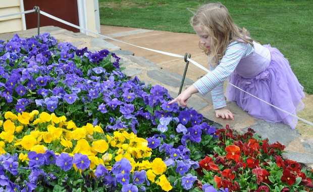 Four-year-old Naomi Donges smells the flowers at Laurel Bank Park.