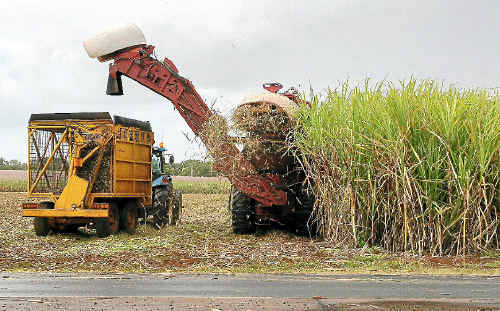 Bundaberg Sugar workers are threatening to take industrial action next week.