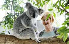 Every day is Koala Day for Friends of the Koala director Lorraine Vass, pictured with one of the koalas in her care. Cathy Adams