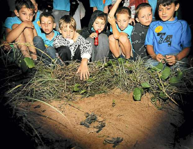 MORE than 130 visitors will head to Mon Repos Conservation Park for the start of the turtle season which officially begins tomorrow.