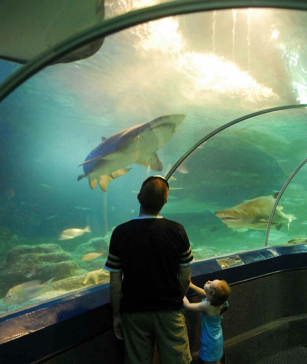 Christmas and New Year holiday makers will be unable to see the sharks exhibit at Underwater World this festive period.