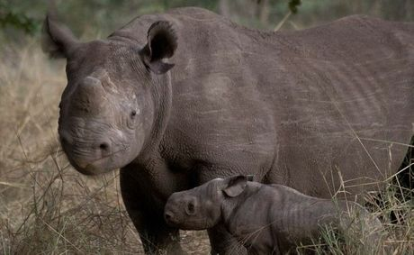 Dalby's Cameron Wheelehen has been working behind the scenes to save the black rhinos.