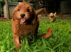 Jet-setting pooches go abroad