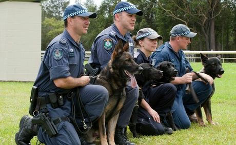 how to join the police dog squad