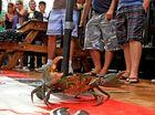 Crab-tastic fun at Chinderah Tavern