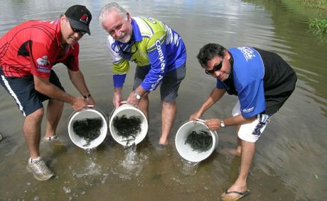 Hundreds of barramundi fingerlings are released into the Pioneer River by fish stocking sponsors Barry Vella, of The Meng Group, Bruce Nash, of Nashy's Compleat Angler, and Steven Vella, of Toyo Tyres.