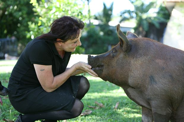 Ellen Watson and her pet pig Piggy-Sue ham it up. Piggy-Sue almost went to the market, with Mrs Watson set to make a reluctant sale, but late yesterday was given a reprieve when Ellen's hubby, Andrew, agreed to let the big porker stay.