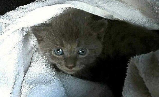 Toogie is receiving loving care after its siblings were killed near Toogoom.