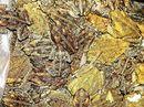 Yamba toad hunt success
