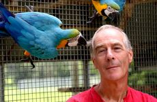 Charles Knie at the Parrot cafe in Crystal Creek with two Macaw's parrots.