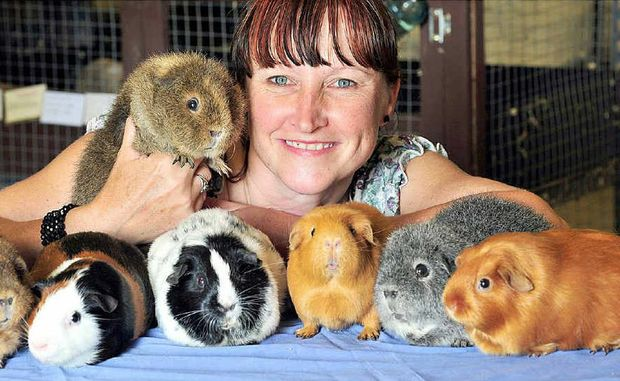 Melanie Barnes, of Cooran, with some of her beloved guinea pigs ... they don't bite and they don't smell.
