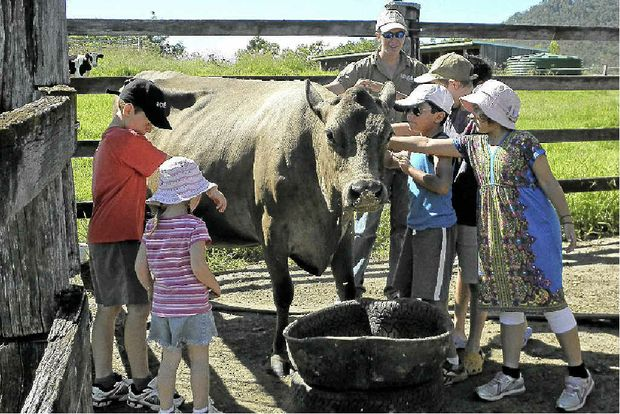 RURAL EXPERIENCE: Children get a taste of what farming life offers at Lillydale Farmstay in the Gold Coast hinterland.