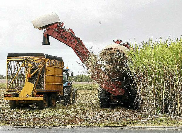 """Diuron is seen as """"very, very important"""" to cane growers."""