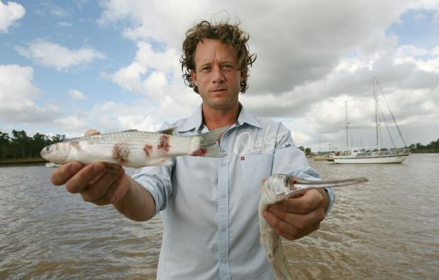 Angler Michael Guerin with a mullet with red spot he caught near Nerimbera and a garfish he caught at the South Side Boat Ramp. They were caught in the Fitzroy River, sparking an investigation.