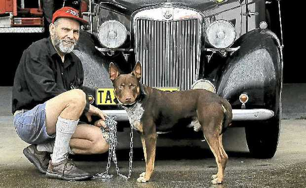 Phil Taylor with George the Red Dog of Murwillumbah.