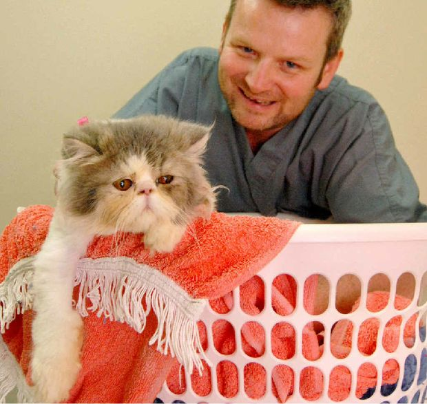 Better Pet Vets' Dr Ashley Young with Me-lu, the Persian cat who survived after accidentally going through a full cycle in the washing machine.