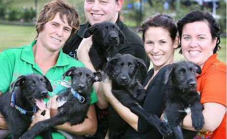 RSPCA staff and volunteers Hayley Kennington, Matan Heimann with Bec Annfield with the pups.