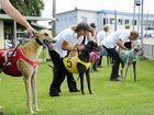 Strike action a boon for Grafton Greys