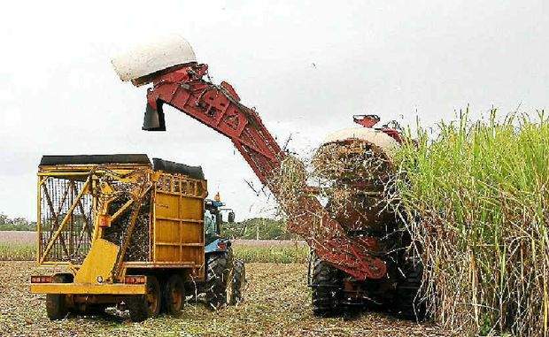 Ideal weather conditions throughout the season bodes well for the upcoming harvest.