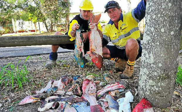 Bundaberg council workers Kerry Coleman and Terry Lee were shocked when they turned up to work behind Bundaberg Hospital to find a pile of fish dumped near their work site.