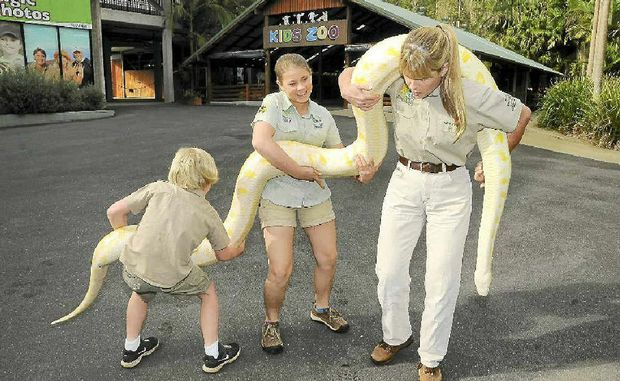 Robert, Bindi and Terri Irwin have their hands full as they carry Alimah the albino Burmese python to her new enclosure at Australia Zoo yesterday.